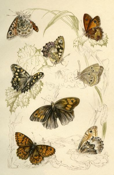 Butterflies, 19th century. Creator: Unknown