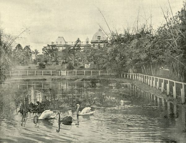"'Papyrus Pond, Brisbane Botanical Gardens', 1901. Subtropical botanic gardens surveyed and selected as a public garden in 1828 by Colonial Botanist Charles Fraser. From ""Federated Australia"". [The Werner Company, London, 1901]"