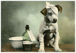 Dog in bandages. Artist: Unknown