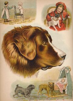 'The Dog', c1900. Artist: Helena J. Maguire