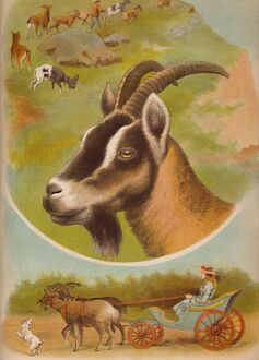 'The Goat', c1900. Artist: Helena J. Maguire