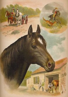 'The Horse', c1900. Artist: Helena J. Maguire