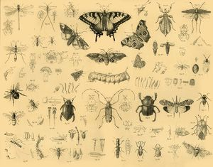 insects c1910 creator unknown