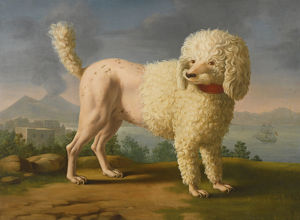 Portrait of Codina, believed to be lady Hamilton's poodle, the bay of Naples